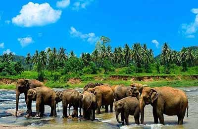 Pinnawala-Sri-Lanka-Tours